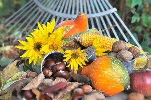 seasonal fruit picked in the garden