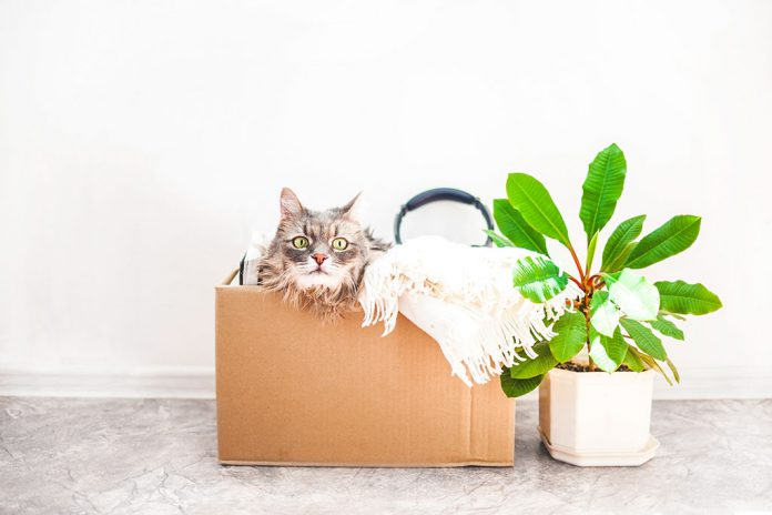 Reuse moving box as cardboard playhouse for your cat.